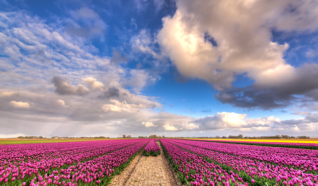 The heavens of Holland., Nikon D750, AF-S Nikkor 16-35mm f/4G ED VR