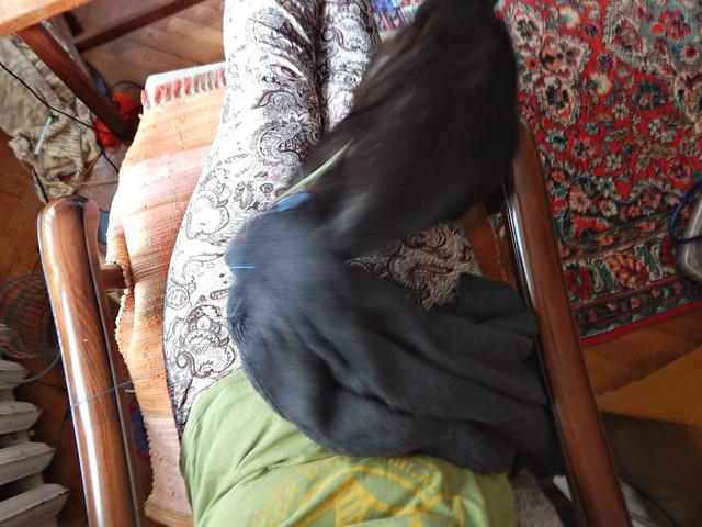 Чёрный кот Муся спрыгивает | Musia the black cat jumping off