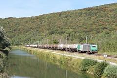 Fret le long du canal du Rhône au Rhin