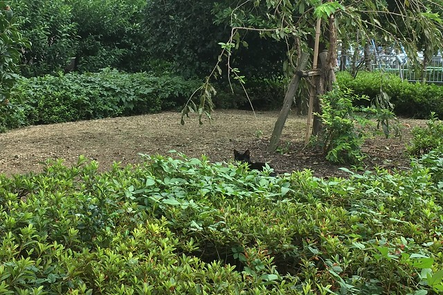 Today's Cat@2017-09-23