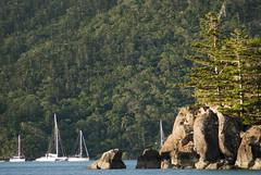 Whitsunday yachts and coastline