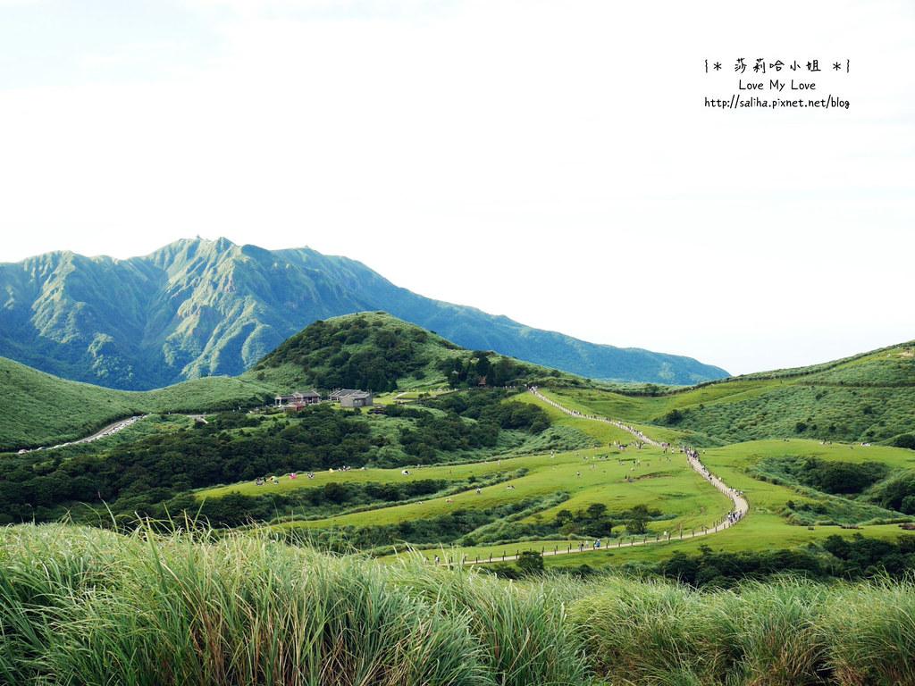 陽明山一日遊行程推薦遊記擎天崗 (8)