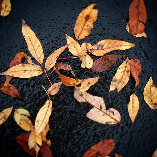 Wet leaves, Apple iPad mini 2, iPad mini 2 back camera 3.3mm f/2.4