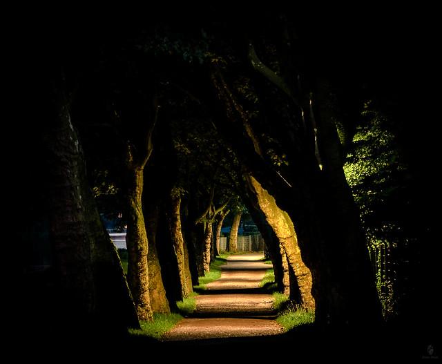 Lichtweg