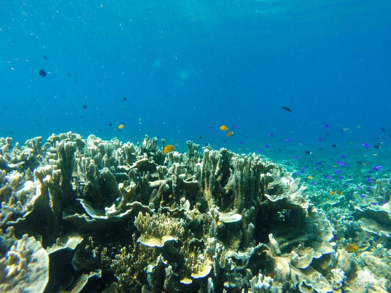 Corals in Pescador Island