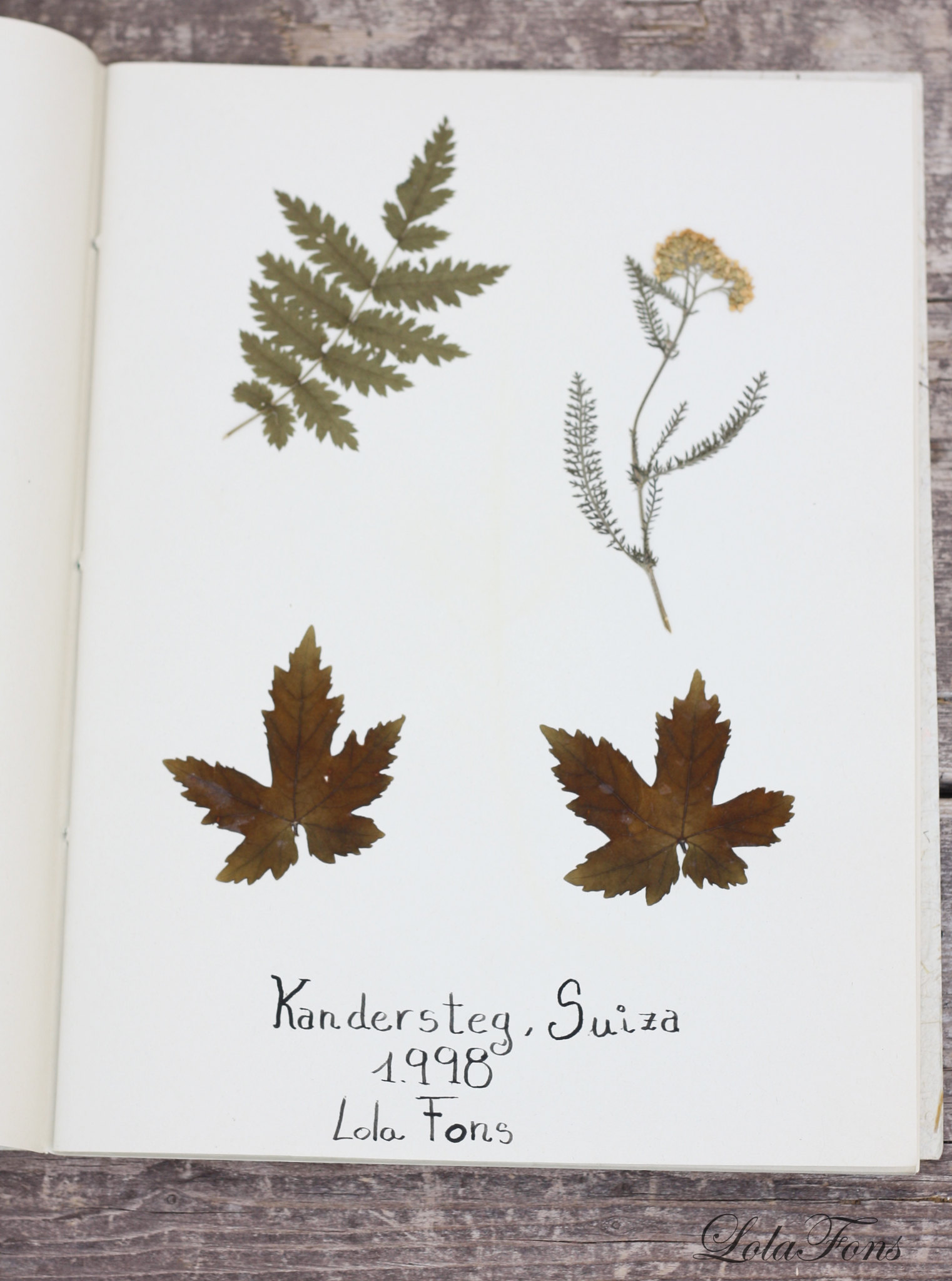 herba2