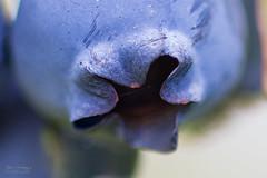 Blueberry (Explored)