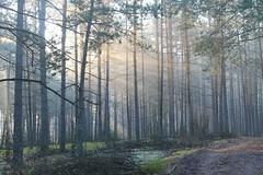 Borsk, Kaszuby, Poland