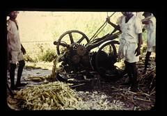 ジャグリ(粗精糖)加工行程 砂糖蔗の搾汁
