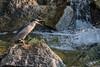 Black-crowned night heron by Erinn Shirley