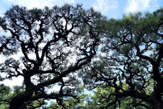 高松。栗林公園