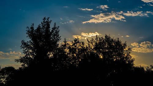 morning landscape flowers nature outdoors trees sertomapark theoutdoorcampus sky clouds siouxfalls sd unitedstates sunrise industar502f35