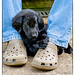 Big Feet...Little Paws by Missy2004