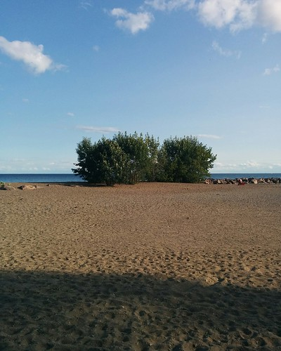 Lone trees #toronto #lakeontario #beaches #balmybeach #trees #latergram