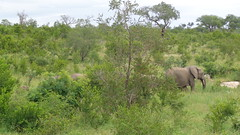 Elephant Herd Passing By