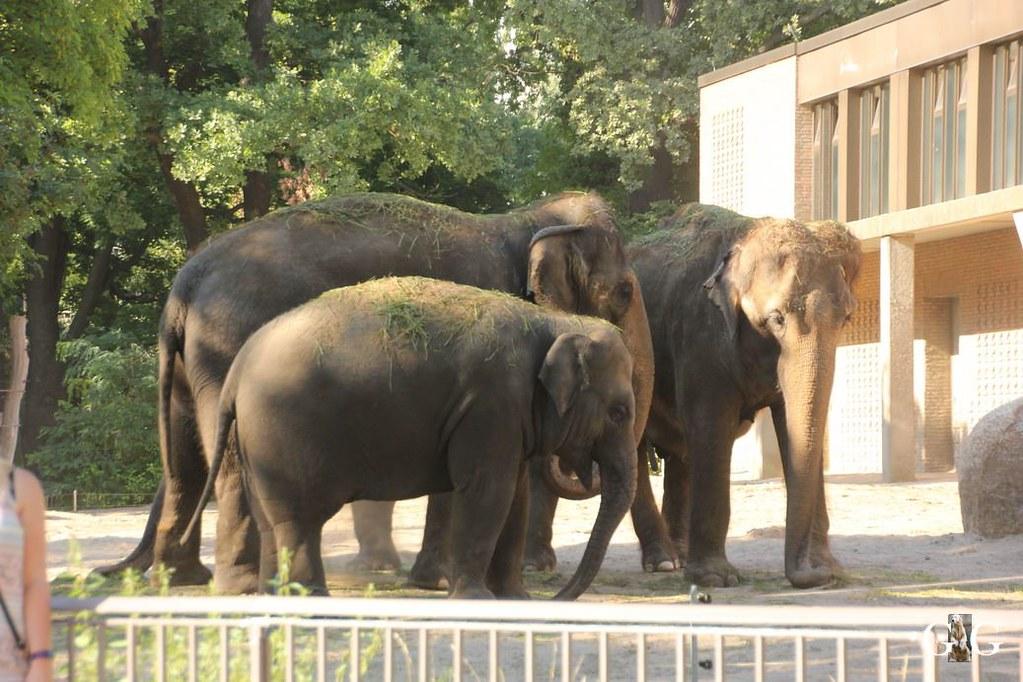 Besuch Zoo Berlin 07.08.20171