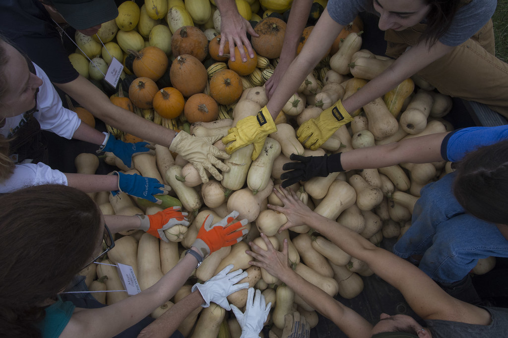 59 - Big Harvest
