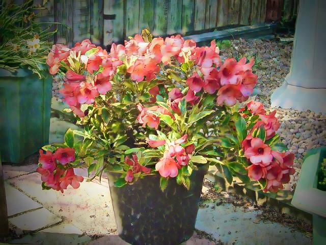 Back_Garden0015_art