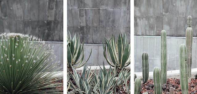 mex-cacti