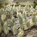 cacti 2 por ikarusmedia