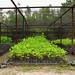 OFI Herbarium