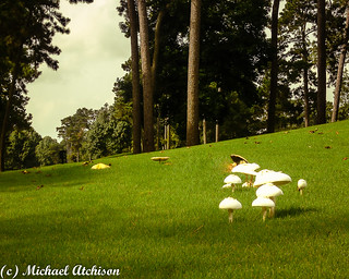 Fairway Mushrooms | by AtchisonGallery