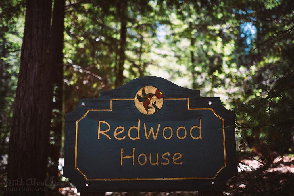 redwoodwedding003