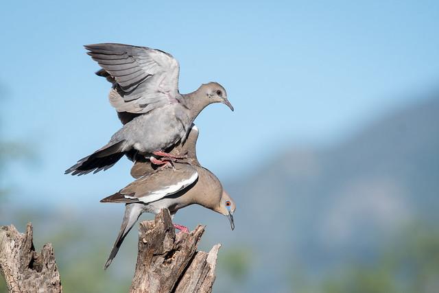 Get Off My Back!