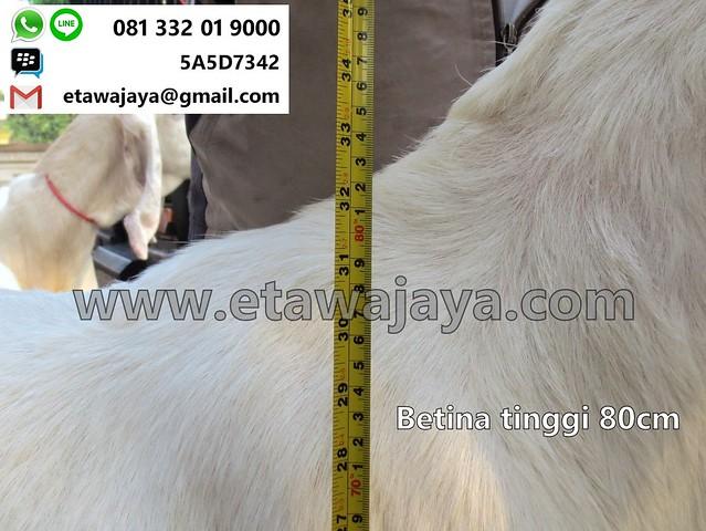 betina-80cm-20170907-23