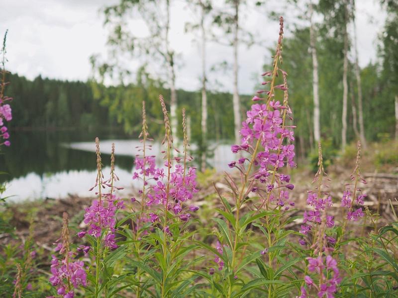 kukkia-metsä-cottage-mökki