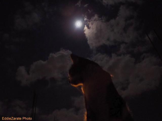Georgie et Lune, Nikon COOLPIX L330