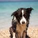 Croatian dog by nat_ka001