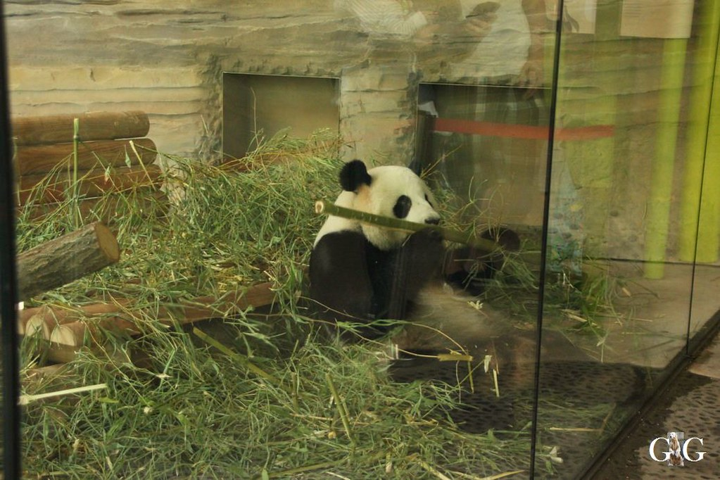 Besuch Zoo Berlin 20.08.201718