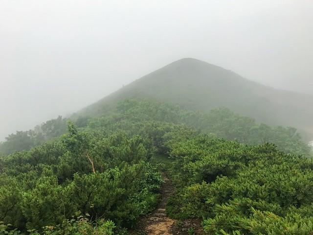 乗鞍岳 平湯・乗鞍新登山道 ハイマツ帯