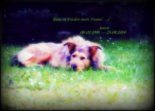 R.I.P my Dog and best Friend