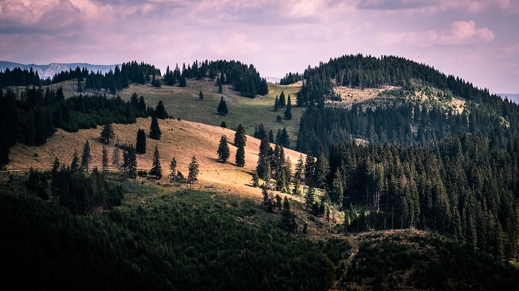 Piatra Craiului, Southern Carpathians, Romania picture