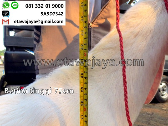 betina-75cm-20170907-43