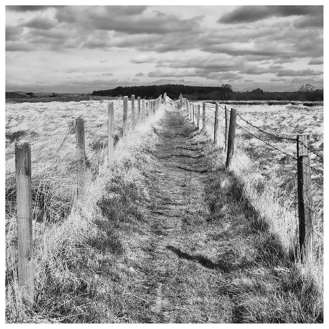 Path, Tentsmuir, Fujifilm X-Pro1, XF27mmF2.8