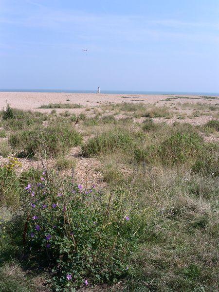 pc deal beach flora