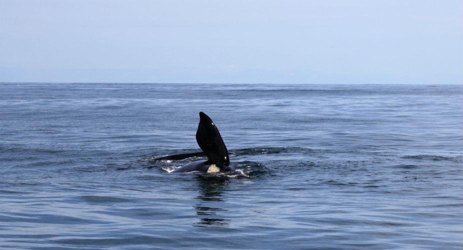 Rondreis Zuid-Afrika: Tuinroute, walvissen kijken in Hermanus | Mooistestedentrips.nl