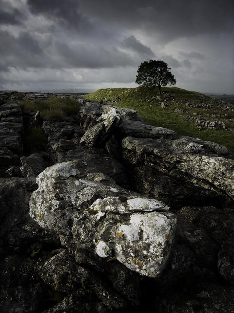 The Other Tree, Nikon D810, AF-S Nikkor 20mm f/1.8G ED