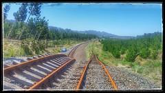 Looking north Pines xing loop.