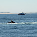Feeding Whale