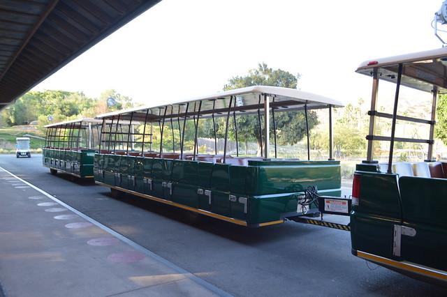 africa tram - san diego safari park crystal neri