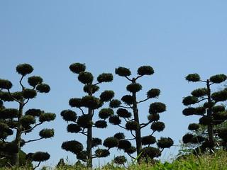 昭和の森 2 木々 11