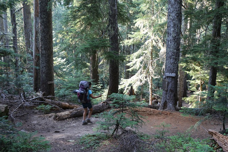 The Buck Creek Trail ends when it hits the Pacific Crest Trail not far from Miners Creek