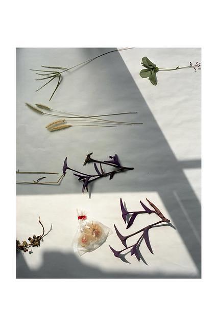 Anne-Sophie Guilletの個展「Komorebi」を開催します