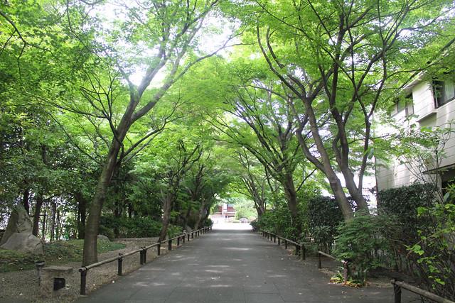 mabashiinari2024