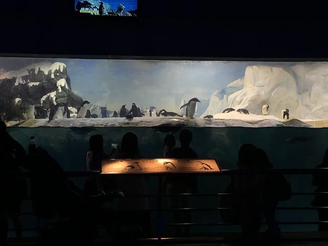 海生館的企鵝區