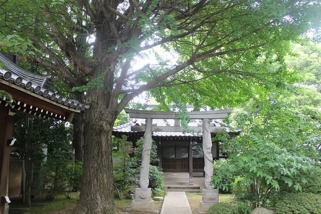 mabashiinari2028